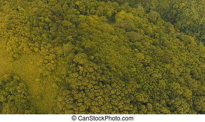 Aerial view evening rainforest. Camiguin island Philippines....
