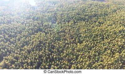 aerial view fall colors tree tops flying over autumn...