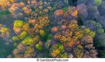 Aerial View. Flying over the beautiful forest trees. Aerial camera shot.