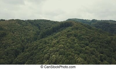 Aerial View. Flying over the beautiful pine forest. Landscape panorama, the camera moves forward