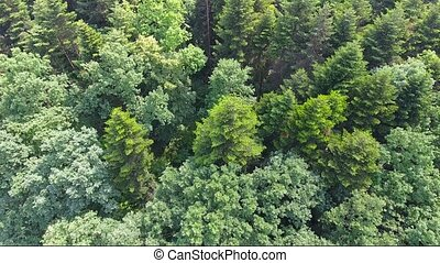 Aerial View. Flying over the beautiful mountain River and beautiful forest. Aerial camera shot.Ukraine