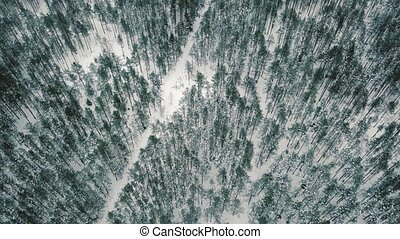 Aerial view flying over winter forest with snowy footpath in...