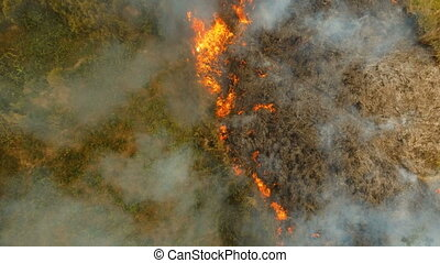 Aerial view forest fire on the slopes of hills and mountains. Forest and tropical jungle deforestation for human food farming and export. large flames from forest fire. Using fire to destroy natural habitat and causing large scale environmental damage in Asia. Coron, Philippines, Palawan, Busuanga. ...