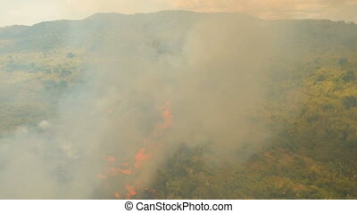 Aerial view Forest fire. Busuanga, Palawan, Philippines. -...