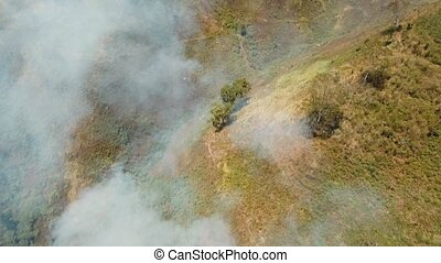 Aerial view Forest fire. Jawa island, Indonesia. - Aerial...