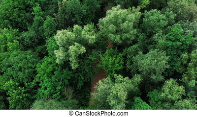 Aerial View from drone of forest with green trees. Shot over...