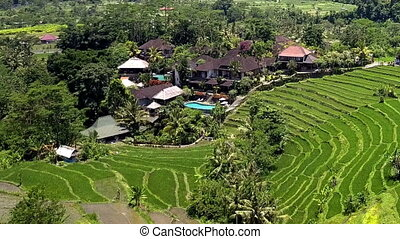 Aerial view from drone on rice terraces. Indonesia. Bali.