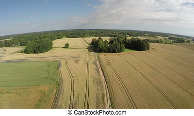 Aerial view from drone over ripe wheat field and rural road