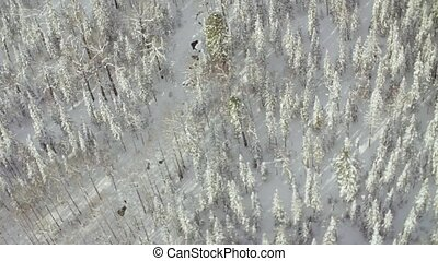 Aerial view from helicopter flying over the forest in the...