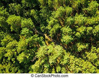 Aerial view from the drone of environmentally friendly foliage forest with a dirt road on a summer sunny day. Top view