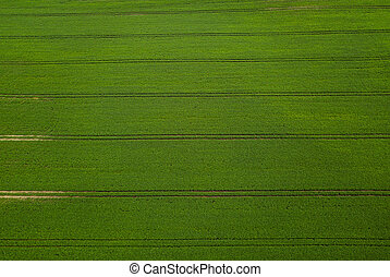 aerial view green soybean field. Agricultural industry and agriculture
