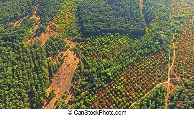 AERIAL VIEW. Green Wood In Large Valley - AERIAL VIEW. The...