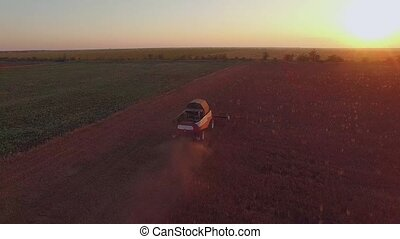 AERIAL VIEW. Harvesting Combine Mowing Buckwheat Field At Sunset