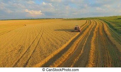 AERIAL VIEW. Harvesting Machine Mows Wheat