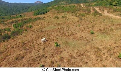 AERIAL VIEW. Horses Grazing At Meadow Near Mountain Forest