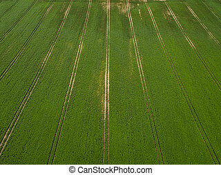 aerial view. Large green field of soybeans. Agricultural industry