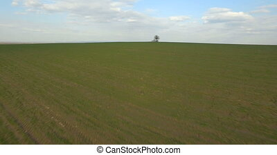 Aerial view, Lonely tree in the middle of the field, background