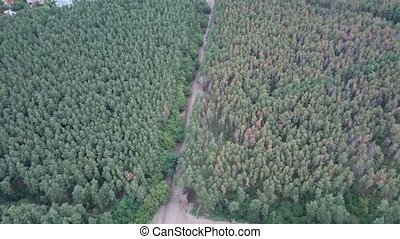 Aerial view of a country road in the forest. Beautiful landscape. Captured from above with a drone. Aerial top view forest. Texture of forest view from above.