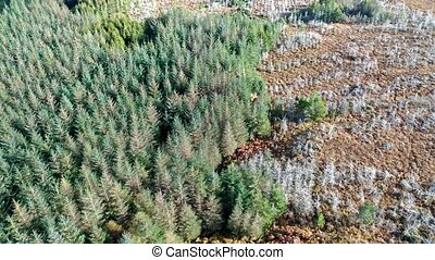 Aerial view of a dying forest in Ireland