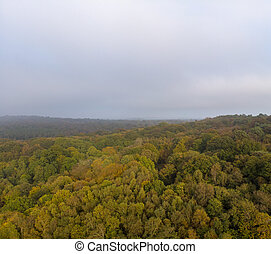 Aerial view of a forest during the autumn