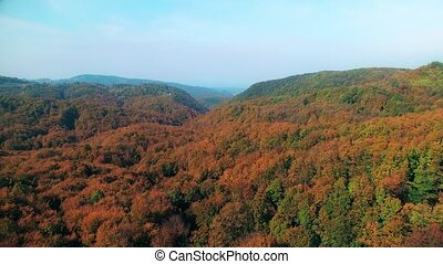 Aerial view of a forest in autumn - Aerial view and...