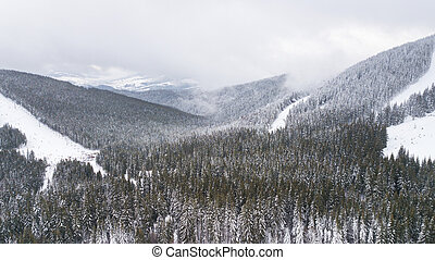 Aerial view of a forest in the mountains covered with snow