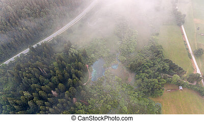 Aerial view of a forest.