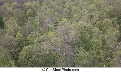 Aerial view of a green forest with tall, green trees