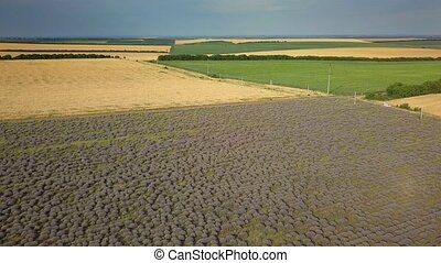 Aerial view of a landscape with lavender and wheat field