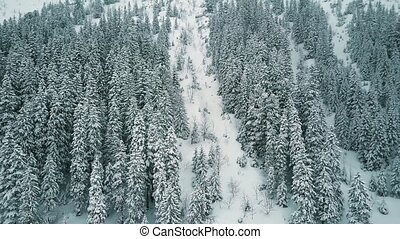 Aerial view of a mountainous forest in the snow - Aerial...