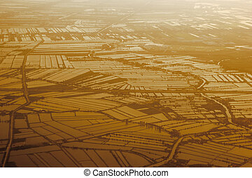 aerial view of a paddy field