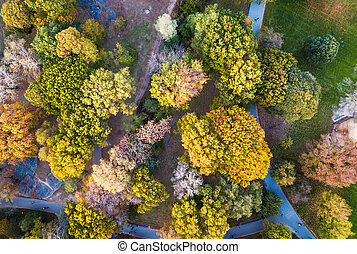 Aerial view of a park in autumn