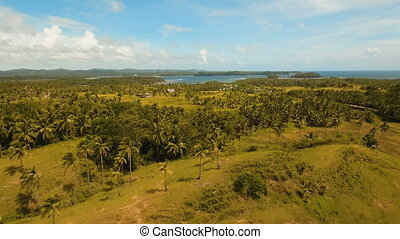 Aerial view of a rice field. Philippines, Siargao.
