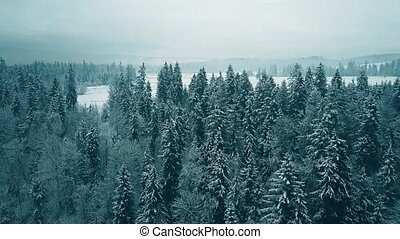 Aerial view of a snowy forest in winter