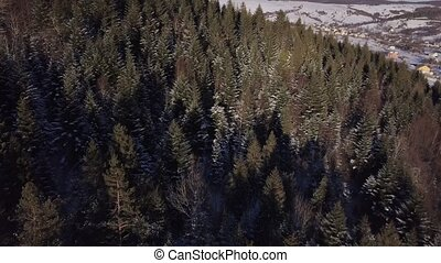 Aerial view of a snowy forest with high pines and village underneath