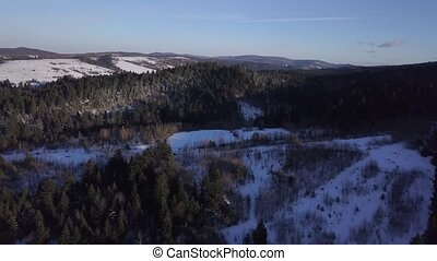 Aerial view of a snowy forest with high pines in the mountains at landscape