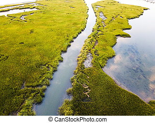 Aerial view of a swamp at sunrise