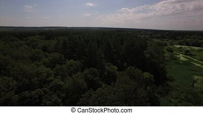 Aerial view of a thick forest in summer