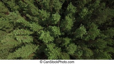 Aerial view of a thick forest on summer day