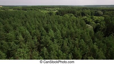 Aerial view of a thick forest on summer day - Beautiful...