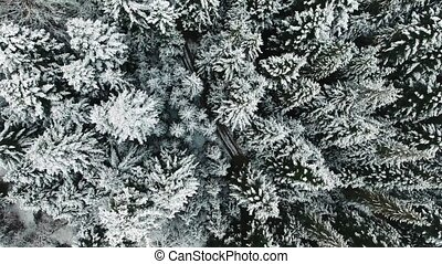 Aerial View Of A Winter Woods. Frame From The top Wiew