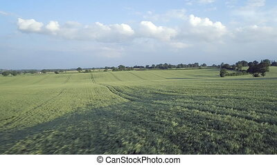 Aerial View of a Young Barley Field Before Harvest - Low...