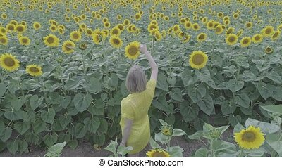 Aerial view of a young pregnant woman walks through the field with blooming sunflowers.