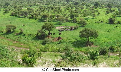 aerial view of African elephants