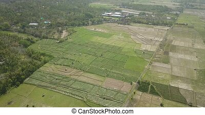 Aerial view of agricultural rice fields in Bali, Indonesia