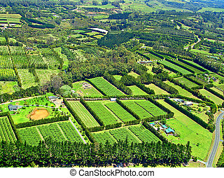 Aerial View of Agriculture near Paihia, Bay of Islands, New Zealand