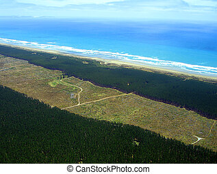 Aerial view of Aupouri Forest (Pine Plantation) alongside Ninety Mile Beach, Northland, New Zealand