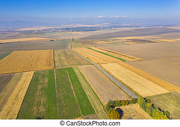 Aerial view of autumn fields