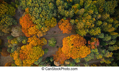 Aerial view of autumn forest.