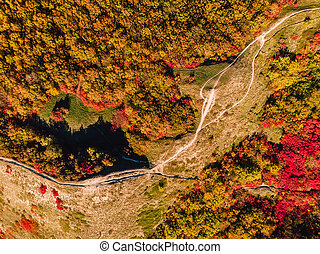 Aerial view of autumn forest and trail